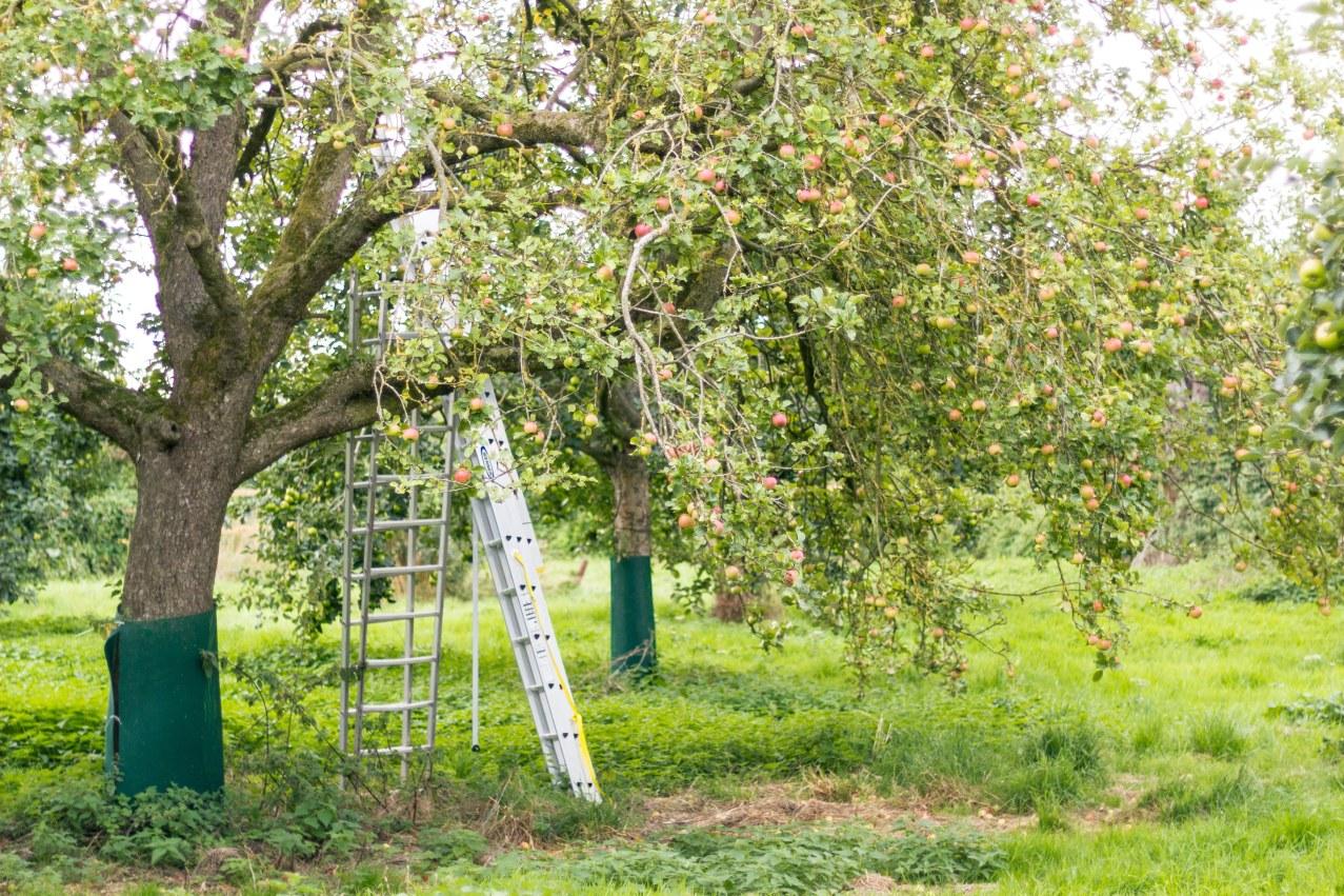 glouc-apple-juice-trust-5 (1)