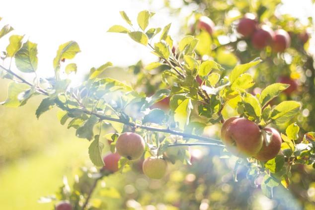 tebay-evas-organic-apple-juice-3 (1)